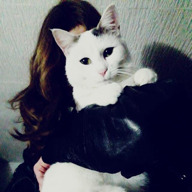 Portrait mit einer weißen Katze direkt vor dem Gesicht.