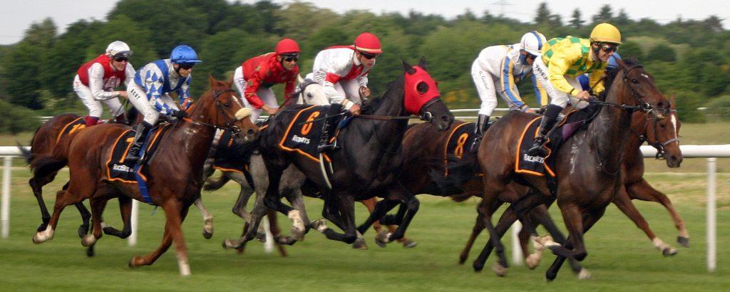 Ein Feld von sieben Pferden in vollem Galopp bei einem Pferderennen